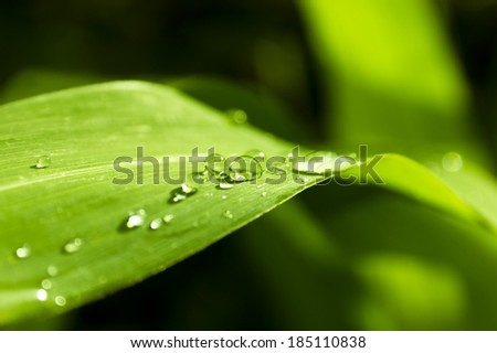 Close-up of a leaf and water drops on it background - stock photo