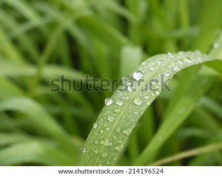 Close-up of a leaf and water drops on it background