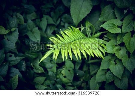 close-up of a leaves fern plant in the forest. - stock photo