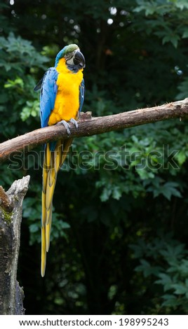 Close-up of a macaw parrot in a tree