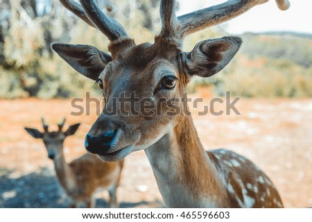Close-up of a male deer