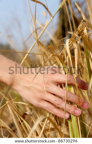 close up of a man's hand touching the grass, 'feeling nature