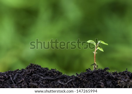 Close up of a new seedling sprouting from the ground with vivid green bokeh background - stock photo