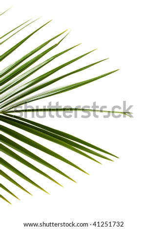 Close up of a palm frond - stock photo