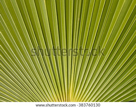 Close up of a Palm Leaf in a garden on the Croatia islands. - stock photo