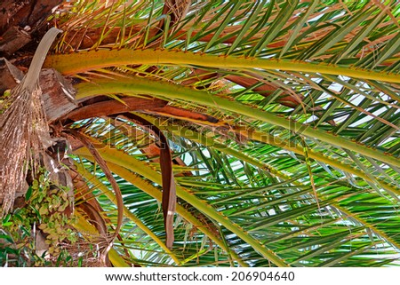 close up of a palm tree seen from below - stock photo