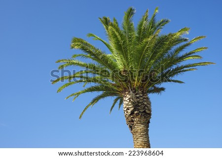 Close up of a palm tree with clear blue sky.