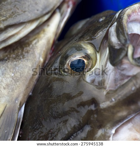 Close up of a pile of fish, Skeena-Queen Charlotte Regional District, Haida Gwaii, Graham Island, British Columbia, Canada - stock photo