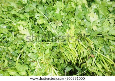 close up of a pile of green fresh parsley offered for sale in a market