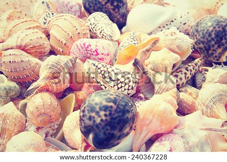 Close up of a pile of seashells on the beach - stock photo