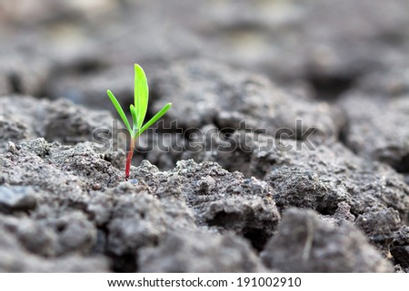 Close up of a plant sprouting from the ground - stock photo