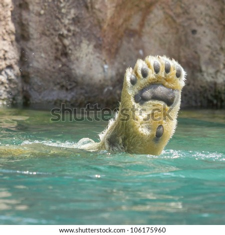 Close-up of a polarbear (icebear) in capticity (Holland) - stock photo