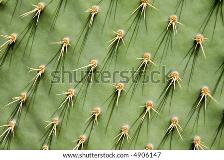 Close-up of a prickly pear cactus ( Opuntia ficus-indica ) - stock photo