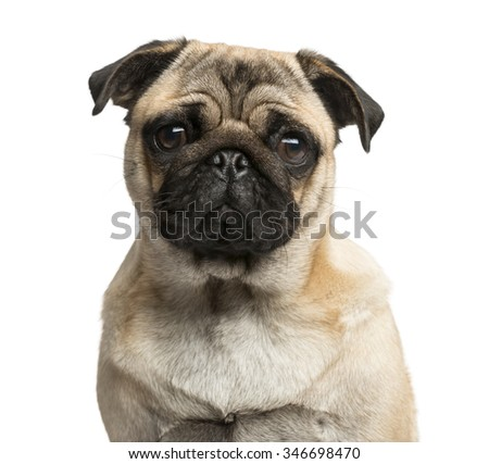 Close-up of a Pug in front of a white background - stock photo
