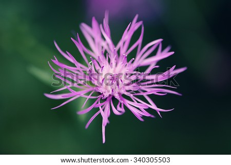 Close up of a purple spiky flower