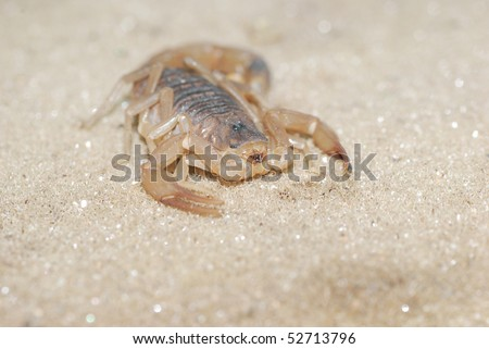 Close up of a scorpion on sand - stock photo