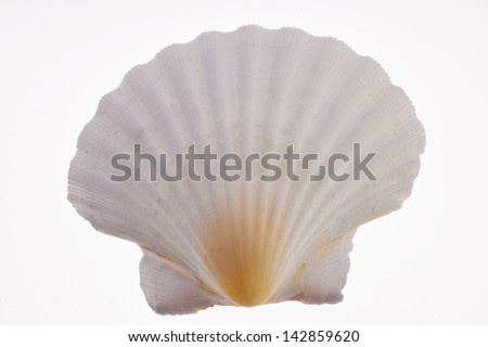 Close up of a Seashell, cutout