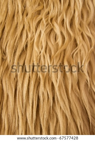 Close up of a sheep wool shepard's jacket - stock photo