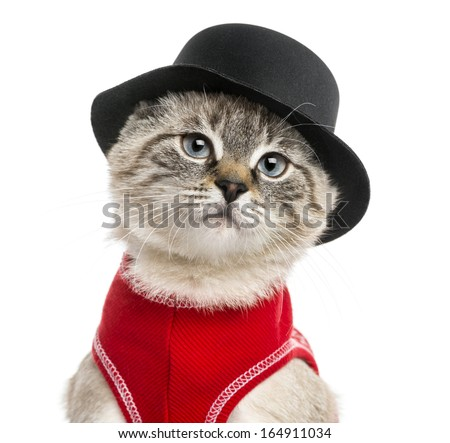 Close-up of a Siamese with red top and top hat, 5 months old, isolated on white - stock photo