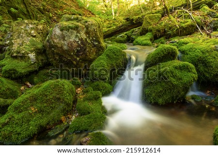 Close up of a small forest stream near Third Vault Falls (Fundy National Park, New Brunswick, Canada) - stock photo
