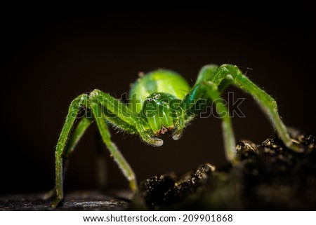 Close up of a spider - stock photo