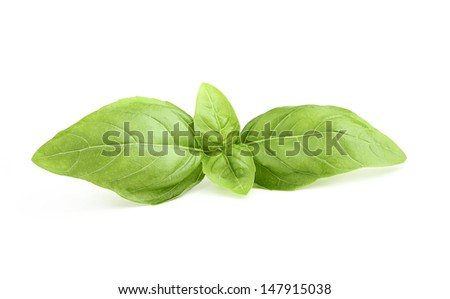 Close-up of a sprig of fresh basil. - stock photo