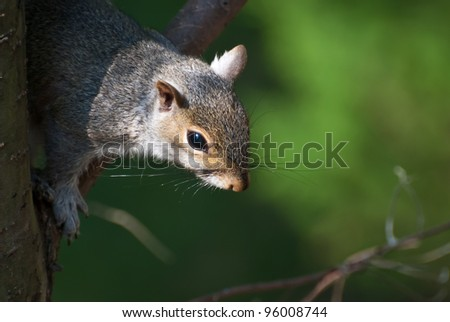 Close Up of a Squirrel in Tree