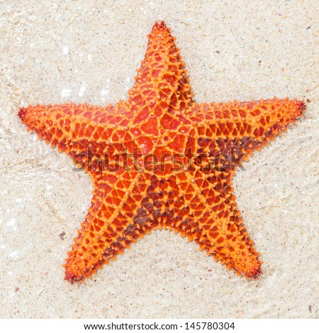 Close-up of a starfish (sea star) near the sandy shore of a tropical beach - stock photo