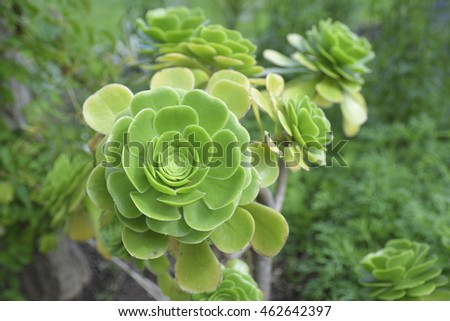 Close up of a succulent plant.