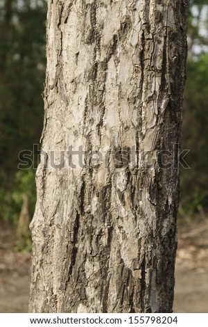 Close-up of a tree, Jim Corbett National Park, Nainital, Uttarakhand, India