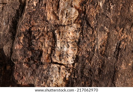 Close up of a tree trunk texture - stock photo