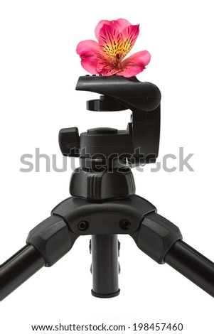 Close-up of a tripod with an alstroemeria flower on top and isolated on a white background. - stock photo