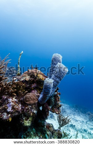 Close-up of a variety of coral and sponges on coral reef in Belize. - stock photo