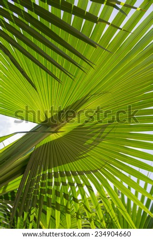 Close up of a variety of palm leaf - stock photo