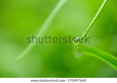 Close-up of  a water droplet on a green grass leaf, nature background - stock photo