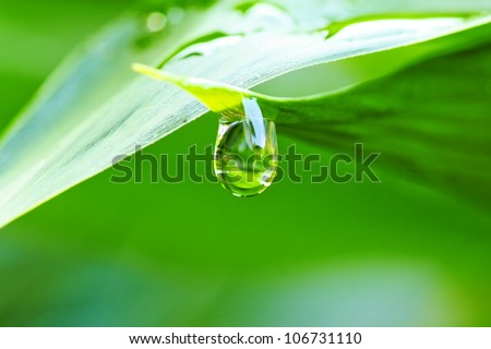 Close up of a water drops on leaves - stock photo
