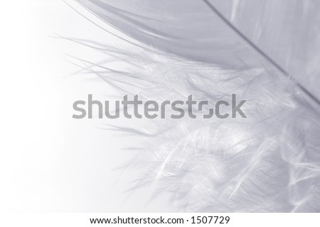 Close-up of a white feather on a white background. Macro photograph: shallow depth of field! - stock photo