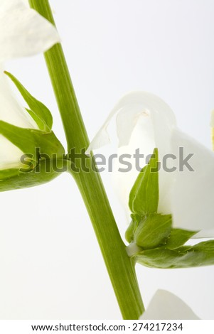 Close up of a white flower isolated on white background, studio shot - stock photo