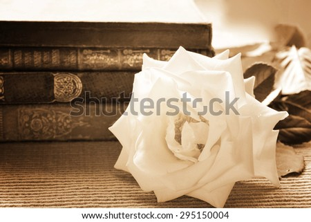 Close-up of a white rose in front of a stack of books.Vintage black&white, sepia-toned - stock photo