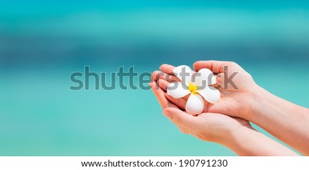 Close up of a woman holding tropical white frangipani flowers over turquoise tropical ocean water - stock photo