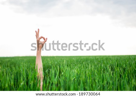 Close up of a woman's hand making ok or zero sign in green grass field and blue sky - stock photo
