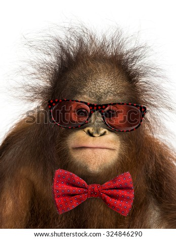 Close-up of a young Bornean orangutan wearing glasses and a bow tie, isolated on white - stock photo