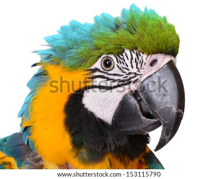 Close up of a Young Macaw - stock photo