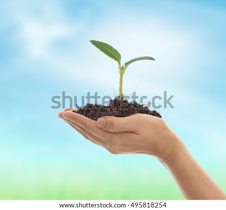 Close up of a young plant sprouting from the ground in hands with nature background. growth concept.