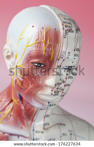 Close up of Acupuncture Model - stock photo