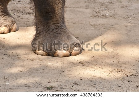 Close up of african elephant in nature