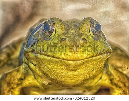 Close up of an American bullfrog,photo art - stock photo
