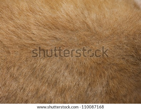 Close up of an animal colored fur texture - stock photo