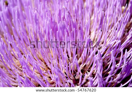 Close up of an artichoke flower