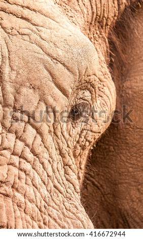 Close up of an elephants eye - stock photo